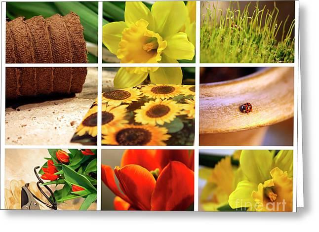 Garden collage Greeting Card by Sandra Cunningham