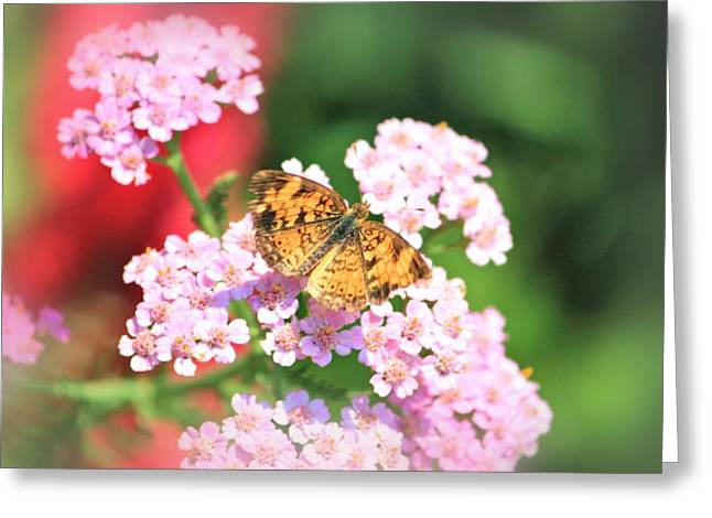 Flower Photos Greeting Cards - Garden Delight Greeting Card by Elizabeth Budd
