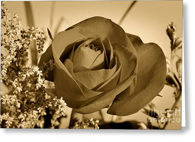 Flowers Stretched Prints Greeting Cards - Garden Delight Sepia Tone Greeting Card by M K  Miller