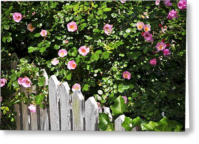 Garden fence with roses Greeting Card by Elena Elisseeva