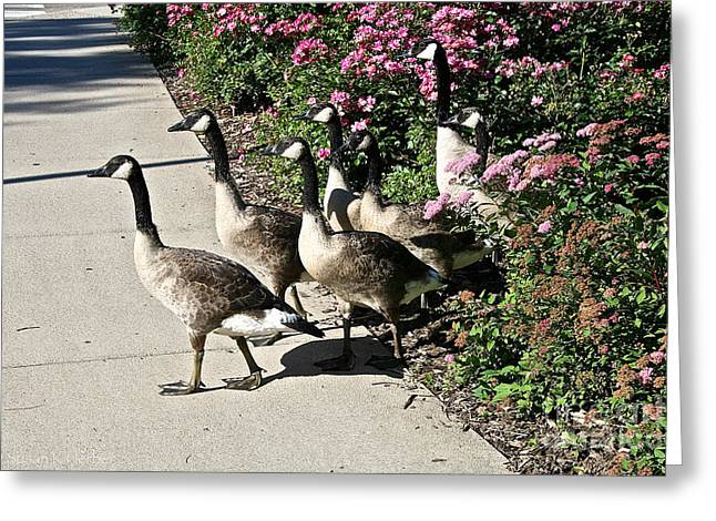 Garden Geese Parade Greeting Card by Susan Herber