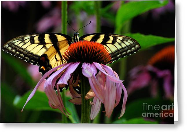 Butterfly On Flower Greeting Cards - Garden Greetings Greeting Card by Lois Bryan