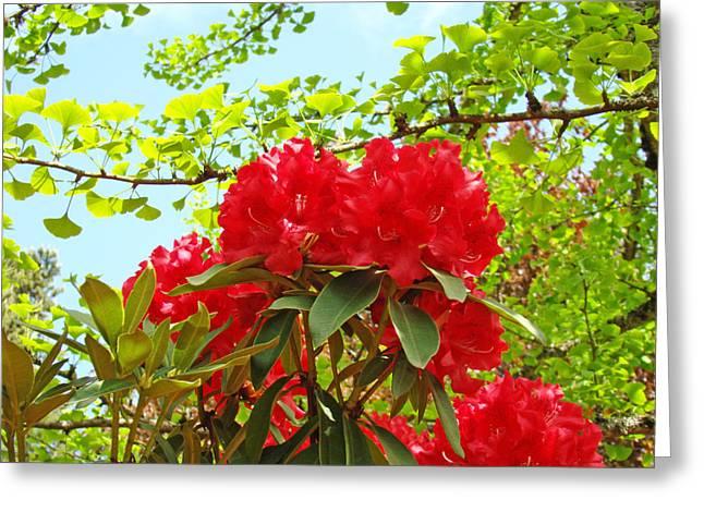 �rhodies Flowers� Greeting Cards - Garden Landscape Red Rhodie Flowers Rhododendrons Greeting Card by Baslee Troutman Fine Art Prints Photography