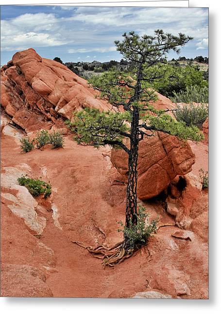 Tree Roots Photographs Greeting Cards - Garden of the Gods  - The name says it all Greeting Card by Christine Till