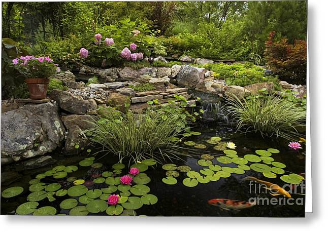 Water Garden Greeting Cards - Garden Pond - D001133 Greeting Card by Daniel Dempster