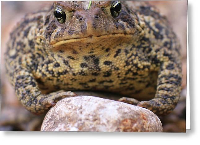 Krista Greeting Cards - Garden Toad Greeting Card by Krista Kulas