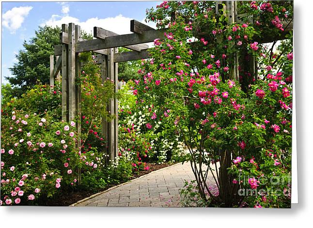 Rose Bushes Greeting Cards - Garden with roses Greeting Card by Elena Elisseeva