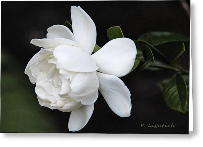 Gardenias Greeting Cards - Gardenia - I Greeting Card by Kerri Ligatich