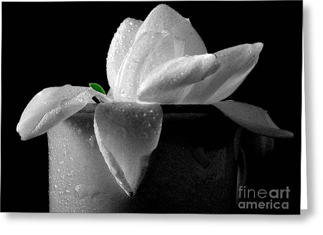 Gardenias Greeting Cards - Gardenia in coffee cup Greeting Card by Silvia Ganora