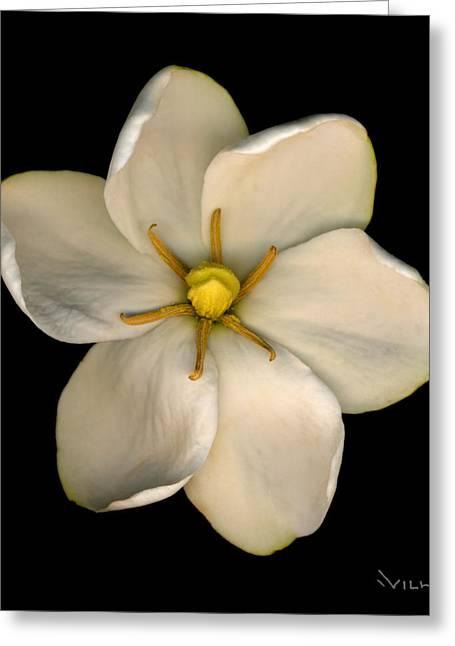 Gardenias Greeting Cards - Gardenia Greeting Card by Richard Wilhelm