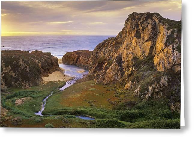Big Sur California Greeting Cards - Garrapata Creek Flowing Greeting Card by Tim Fitzharris