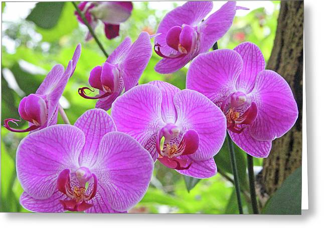 Becky Greeting Cards - Gathering of orchids Greeting Card by Becky Lodes