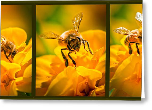 Bees Greeting Cards - Gathering Pollen Triptych Greeting Card by Bob Orsillo