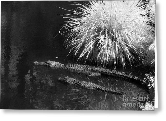 Jeff Holbrook Greeting Cards - Gator Family in Swamp Greeting Card by Jeff Holbrook