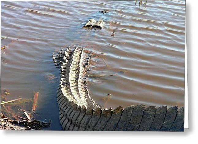 Al Powell Photography Usa Greeting Cards - Gator Tail Greeting Card by Al Powell Photography USA
