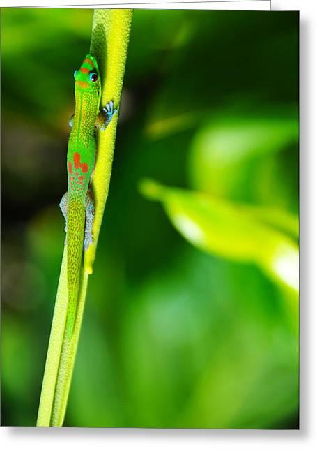 Brian Bonham Greeting Cards - Gecko On A Stick Greeting Card by Brian Bonham