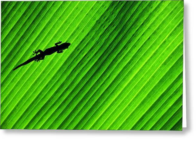 Gecko Silhouette Greeting Card by Brian Bonham