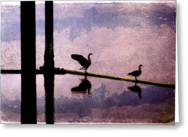 Bird Collage Greeting Cards - Geese at Dawn Greeting Card by Carol Leigh