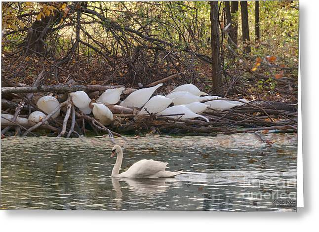 Bird Cocoon Greeting Cards - Geese Cocoons Greeting Card by David Arment