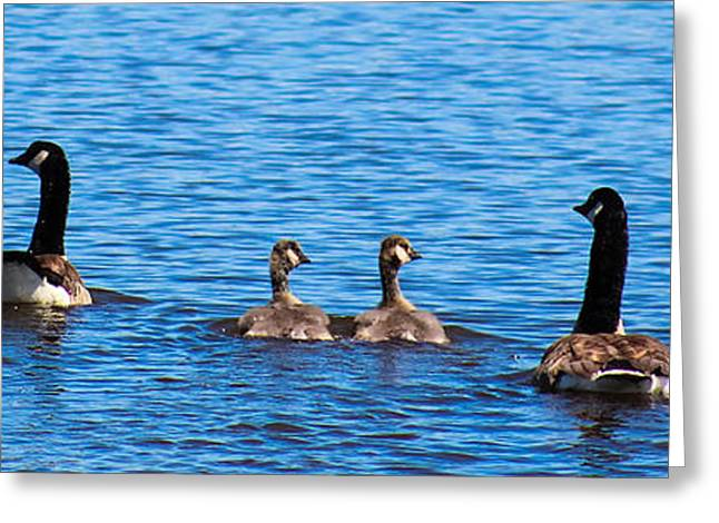 Geese Family Greeting Cards - Geese Family Greeting Card by Christy Patino