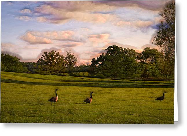 Field. Cloud Digital Greeting Cards - Geese on Painted Green Greeting Card by Bill Tiepelman
