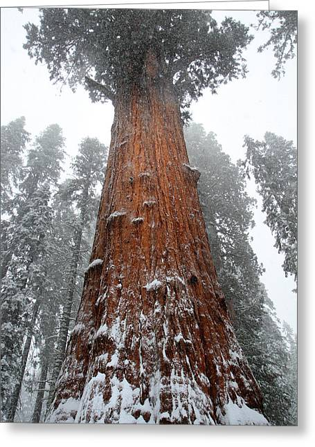 Sequoia National Park Greeting Cards - General Sherman is the biggest tree in the world Greeting Card by Pierre Leclerc Photography