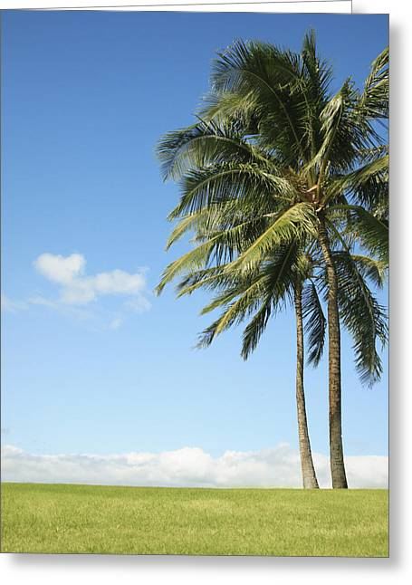 French Open Greeting Cards - Generic Palm Tree Greeting Card by Brandon Tabiolo - Printscapes