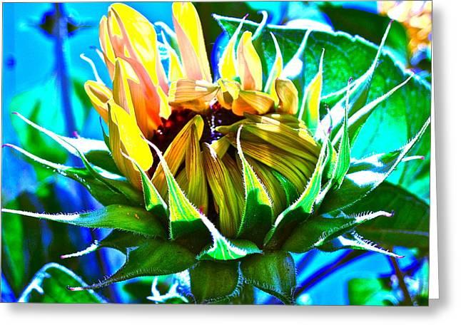 Photographs Digital Art Greeting Cards - Genesis Greeting Card by Gwyn Newcombe