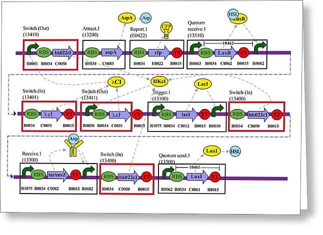 Genetic Greeting Cards - Genetic Circuit Diagram Greeting Card by Drew Endymit