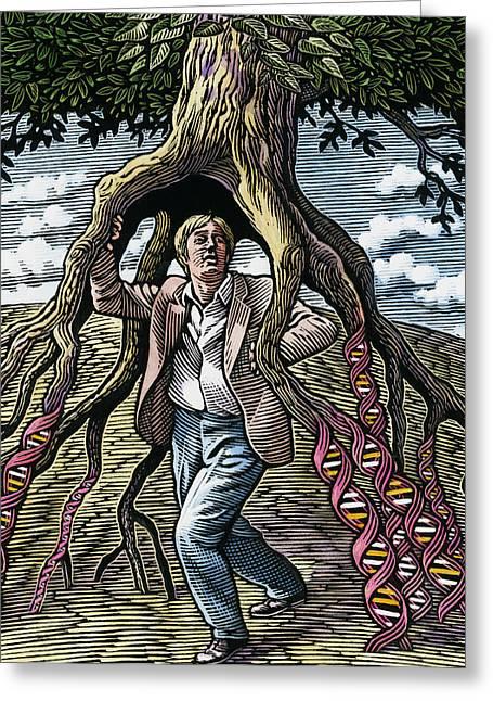 Human Tree Greeting Cards - Genetic Inheritance Greeting Card by Bill Sanderson