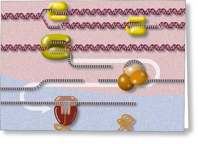 Genetic Molecular Mechanisms, Artwork Greeting Card by Art For Science