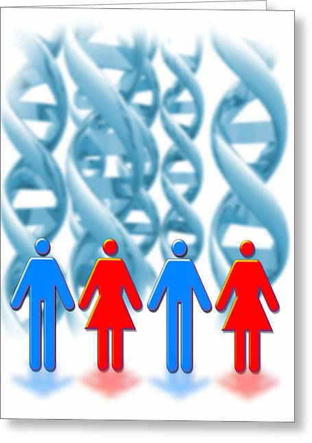 Gay Relationship Greeting Cards - Genetic Sexuality Greeting Card by Victor Habbick Visions