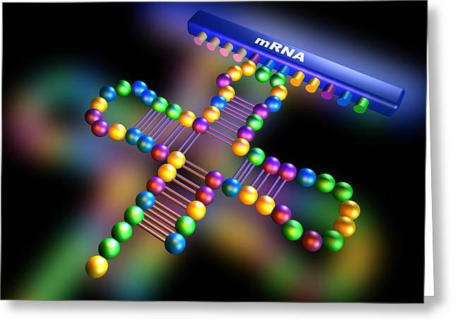 Trna Greeting Cards - Genetic Translation Greeting Card by Pasieka