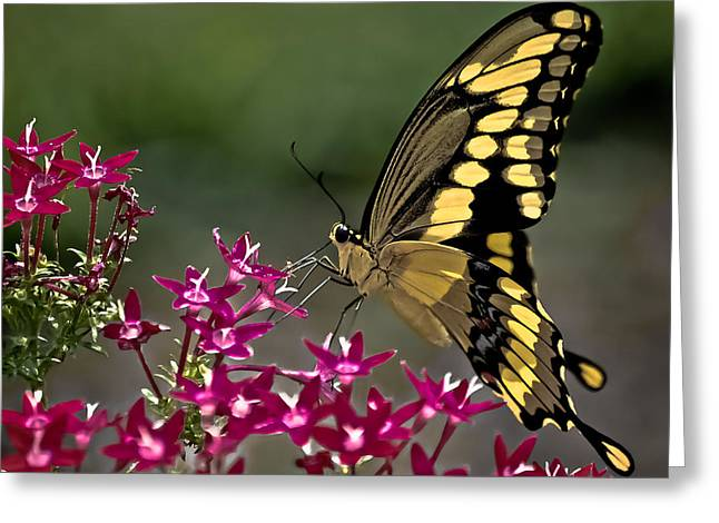 Gentle Giant Greeting Card by DigiArt Diaries by Vicky B Fuller