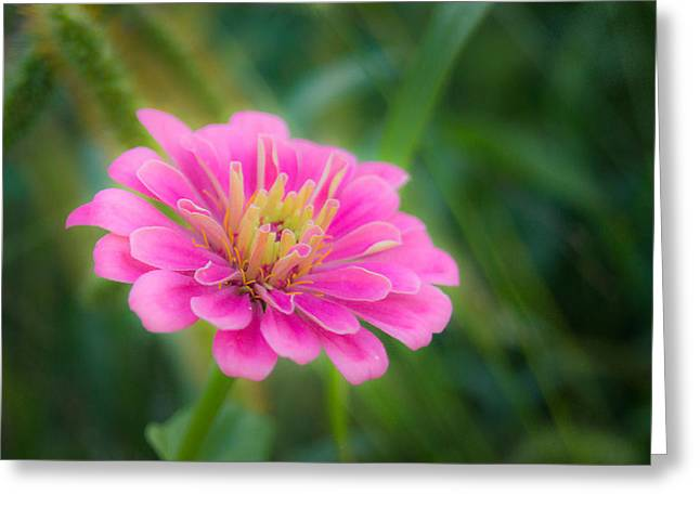 Wisconsin Wildflowers Greeting Cards - Gentle Reminder Greeting Card by Bill Pevlor