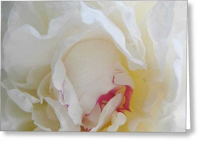 Gently Unfolding Greeting Card by Shirley Sirois
