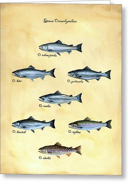 Chum Greeting Cards - Genus oncorhynchus Greeting Card by Logan Parsons