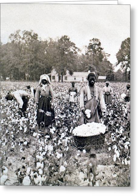 Sharecropper Greeting Cards - Georgia Cotton Field - c 1898 Greeting Card by International  Images
