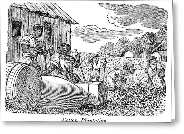 Cotton Pickers Greeting Cards - Georgia: Cotton Plantation Greeting Card by Granger