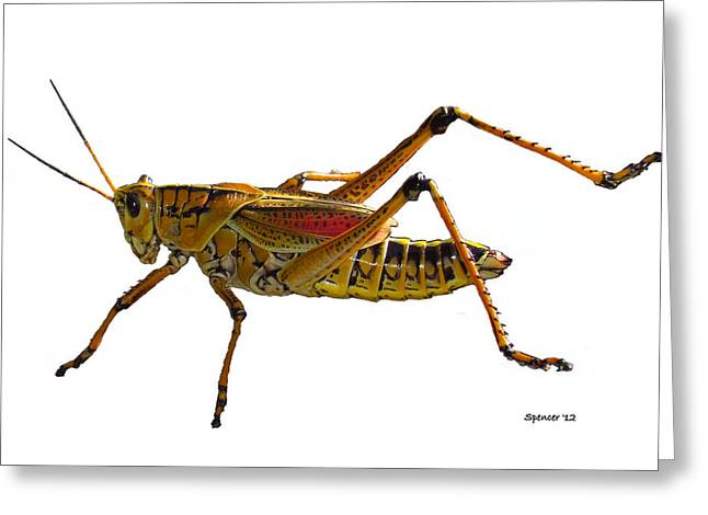 Romalea Microptera Greeting Cards - Georgia Thumper Greeting Card by T Guy Spencer