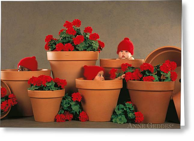 Red Geranium Greeting Cards - Geranium Pots Greeting Card by Anne Geddes