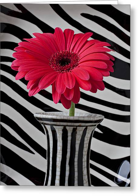 Gerbera Greeting Cards - Gerbera daisy in striped vase Greeting Card by Garry Gay