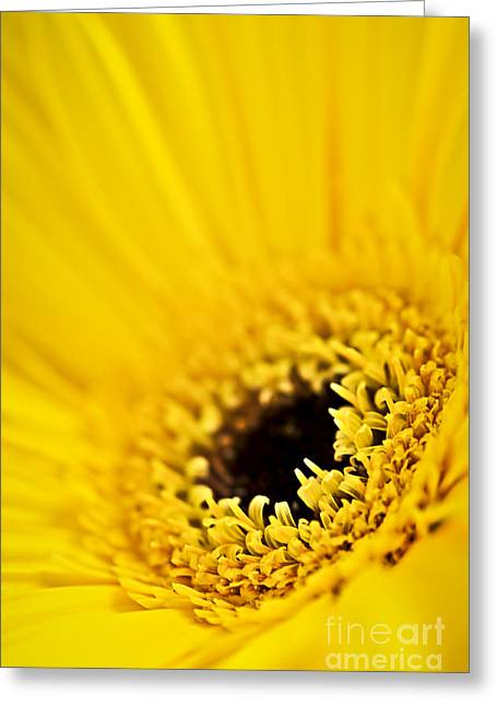 Vibrant Greeting Cards - Gerbera flower Greeting Card by Elena Elisseeva