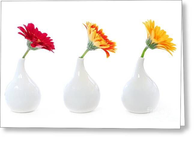 Lifestyle Greeting Cards - Gerbera flowers in vases Greeting Card by Elena Elisseeva