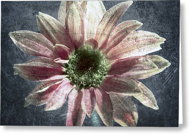 Dew Digital Art Greeting Cards - Gerbera Greeting Card by Stylianos Kleanthous