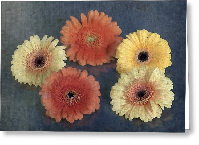 Gerbera Greeting Cards - Gerberas Greeting Card by Joana Kruse