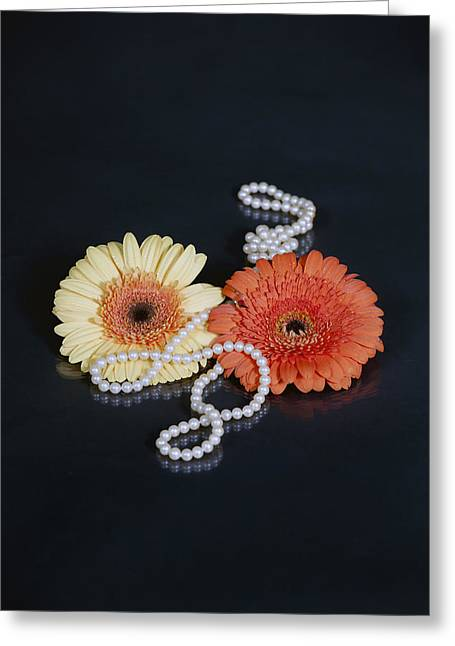 Gerbera Greeting Cards - Gerberas With Pearls Greeting Card by Joana Kruse