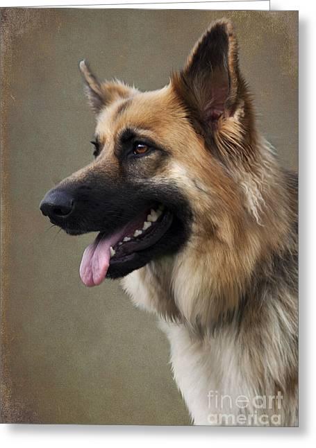 Panting Dog Greeting Cards - German Shepherd Dog Greeting Card by Ethiriel  Photography