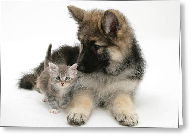 House Pet Greeting Cards - German Shepherd Dog Pup With A Tabby Greeting Card by Mark Taylor