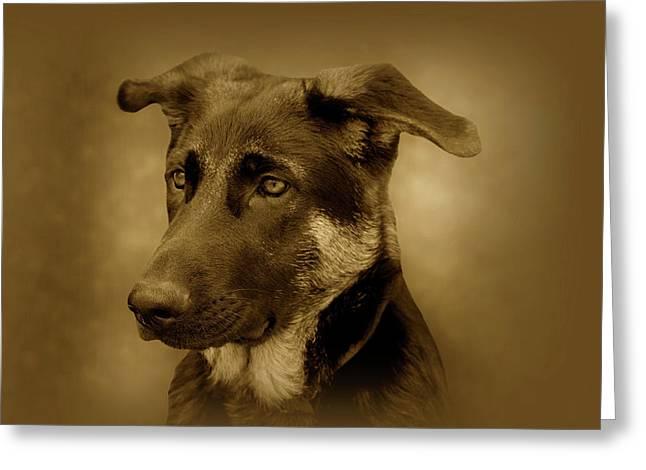 German Shepherd Art Greeting Cards - German Shepherd Pup Greeting Card by Sandy Keeton